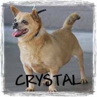 READ CRYSTAL'S STORY