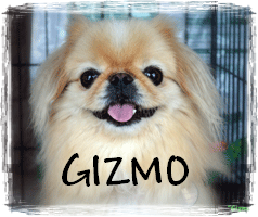 READ GIZMO'S STORY